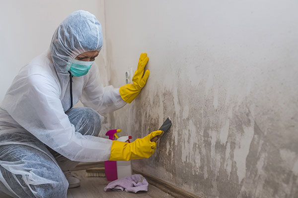 Mold Remediation Contractor Insurance - Business Insurance Center