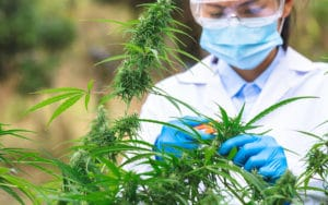 cannabis business insurance